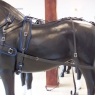 Pair Horse BioThane Harness With Back Band